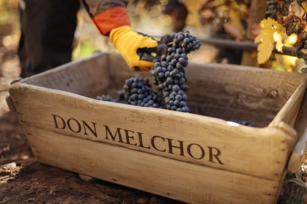 Great harvest for Don Melchor